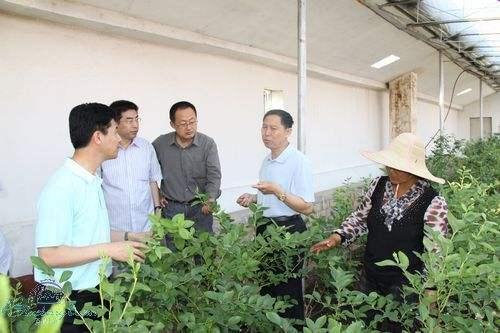 植物冠层分析仪在郑州林业局的实际应用